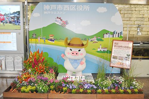 記事 神戸の花で神戸の街を飾る「街の彩(いろどり)ガーデン」のアイキャッチ画像