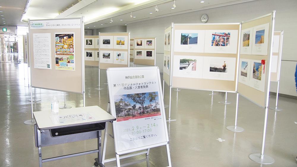 記事 第11回デジタルフォトコンテスト 総合運動公園のグリーンアリーナ神戸コスモスギャラリー(須磨区緑台)のアイキャッチ画像